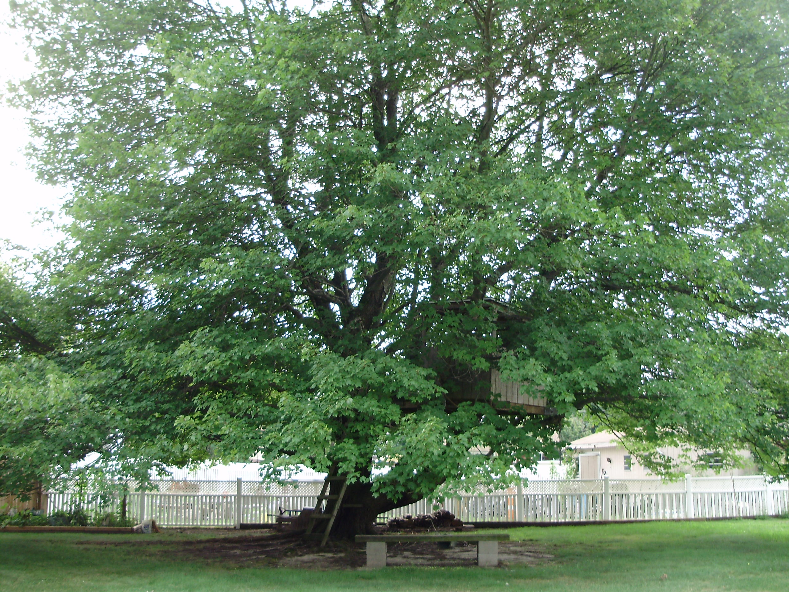 trees for backyard large and beautiful photos photo to select