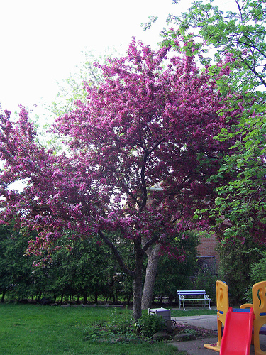 Trees for small backyards large and beautiful photos for Prettiest small trees