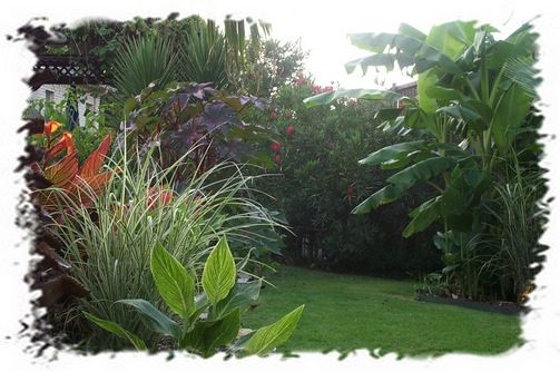 tropical backyard landscaping photo - 2